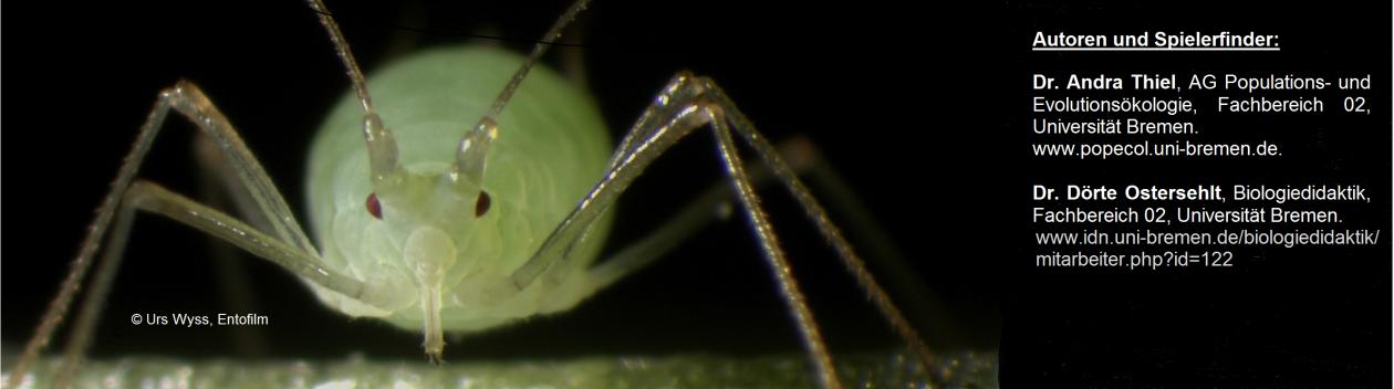 Die vielen Feinde der Blattlaus