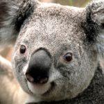 Profilbild von Leonie