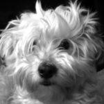 Profilbild von Lina