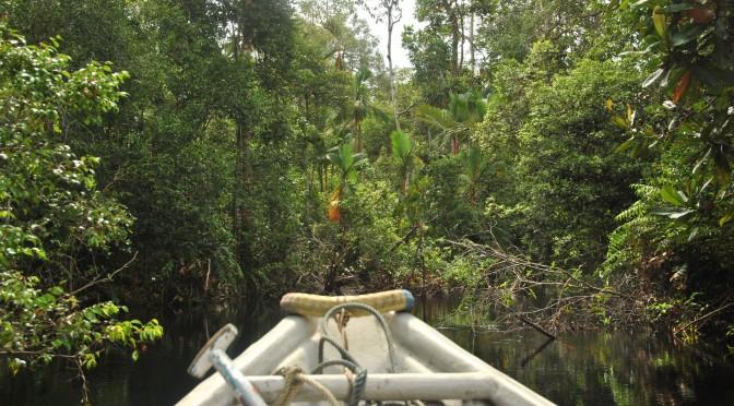 CO2-Emissionen südostasiatischer Flüsse geringer als vermutet