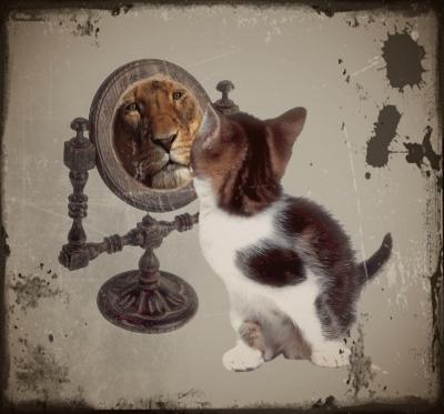 Blogs in der schule oder die katze im spiegel ni fu for Spiegel tv 11 12