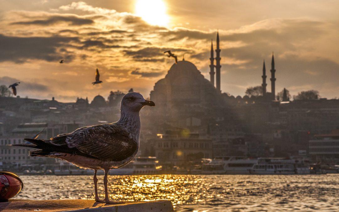 Praktikum in Istanbul im Rahmen des Roots-Programms der Universität Bremen