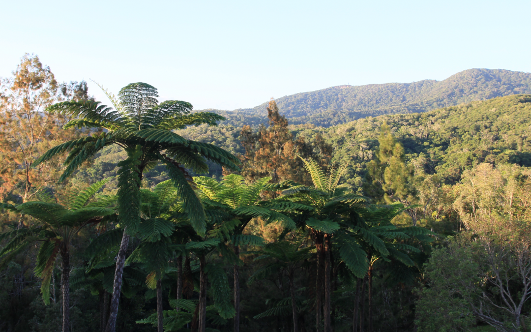 Doing science in a tropical paradise