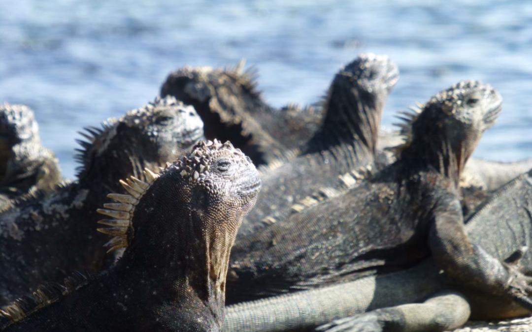 Erfahrungsbericht des Praktikums an der Charles Darwin Fundation, Galapagos