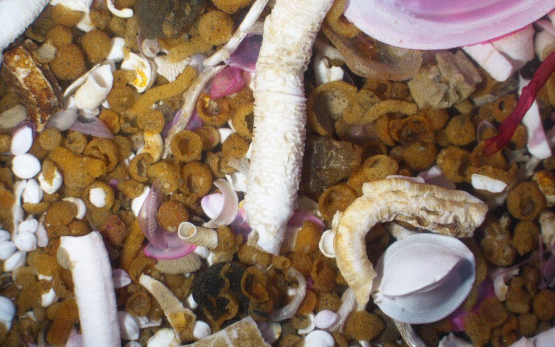 Marine Biology: 4 Monate mit Erasmus+ in Gent (Belgien)