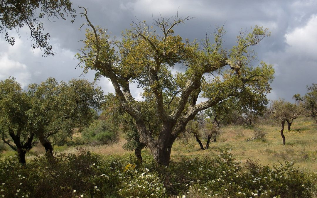 "Deep Ecology – Erasmus-Praktikum auf der Farm ""A Quinta"", Portugal"