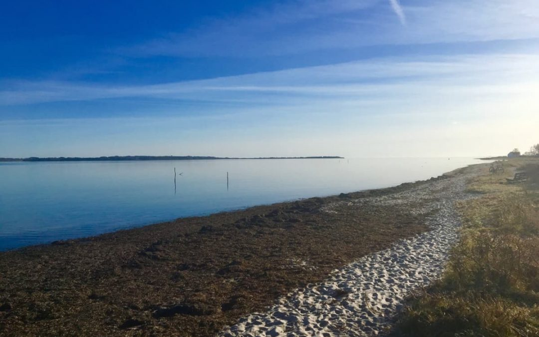 Microbial physiology at the extremes – Erasmus-Internship in Aarhus