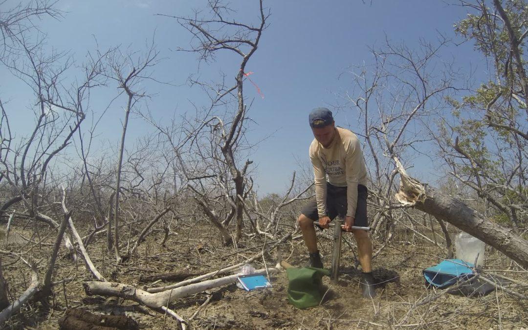 Ökologisch / biogeochemisches Erasmus-Praktikum in einem Mangrovenwald auf Bonaire, niederländische Karibik